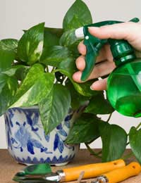 Houseplants as Air Cleansers