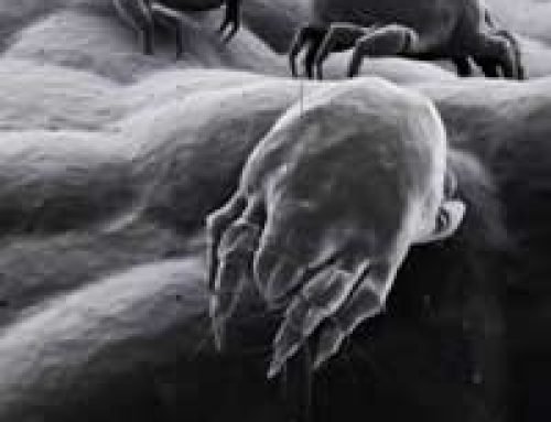 Reducing Dust Mites in Your Home