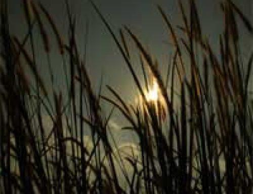Negative Effects of Sky Glow